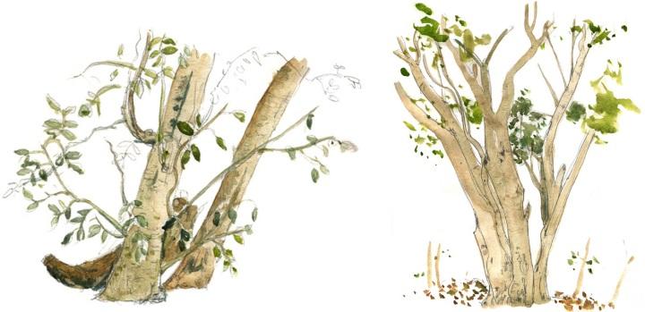 hammocktrees1