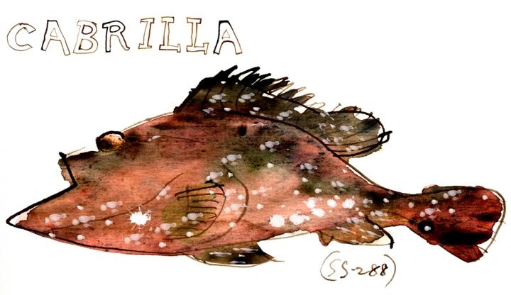 cabrilla